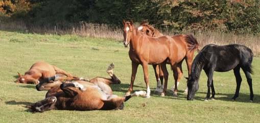 okt 2012 - rollen paard DoortPA197708doort echt