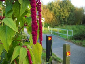 wandelen in Midden-Limburg-vlakke land